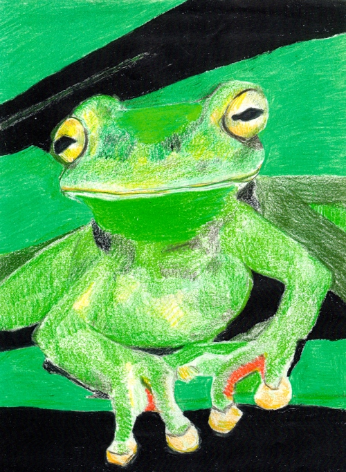 """Frog"" pencil crayons on paper"